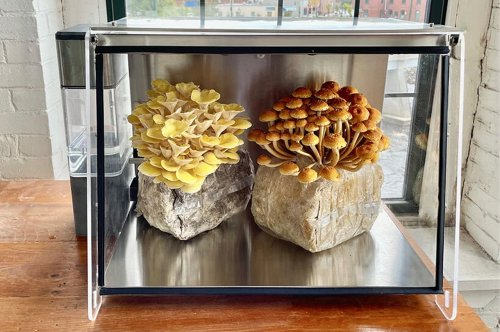 This automated mushroom chamber uses smart technology to grow and harvest your own mushrooms at home!