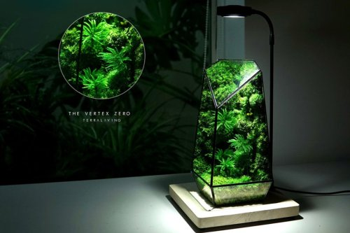 This glass terrarium encases biologically inactive moss to create an indoor garden without the upkeep!