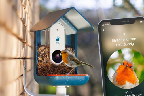 """This """"Nest Security Camera"""" for birds lets you bird-watch right from inside your house!"""