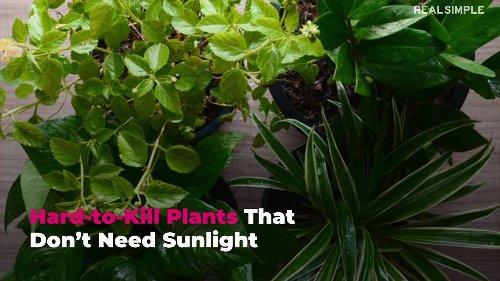 Hard-to-Kill Plants That Don't Need Sunlight