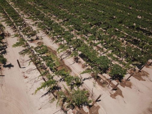 Extreme heat and drought are crushing key crops and punishing U.S. farmers