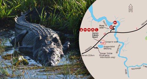 Huge crocodile launches itself into boatload of fishermen