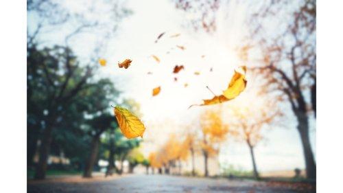10 Grounding Poses to Balance Your Vata Dosha This Fall