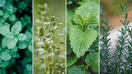 5 Healing Herbs You Should Be Growing in Your Garden | Yoga Journal