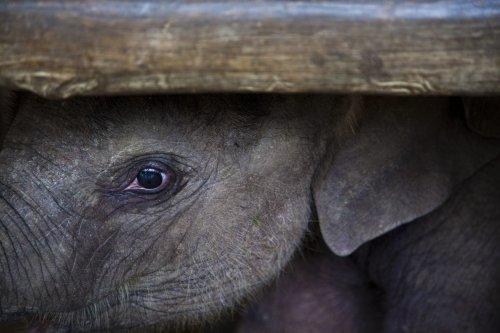 Buy These Yoga Pants, Help Save the Elephants