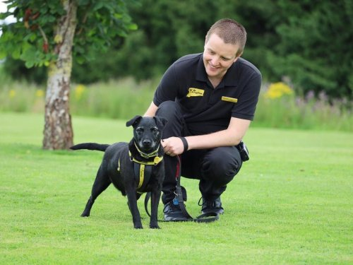 These are the 8 dogs struggling to be rehomed at Dogs Trust Leeds this week
