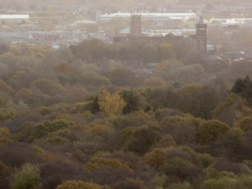 More than 1m new trees for the Northern Forest as Government provides £15m