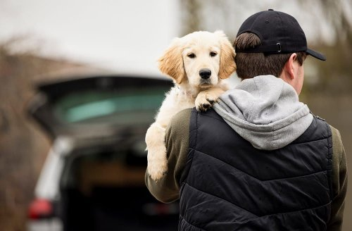 Rise of pet theft since start of Covid pandemic is 'worrying', says Environment Secretary