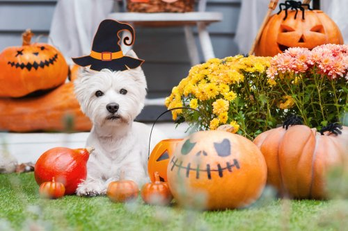 These are the most popular dog costumes for Halloween, as searched on Google -