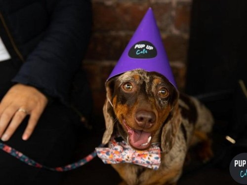 This puppy cafe is returning to Leeds next month for a sausage dog special