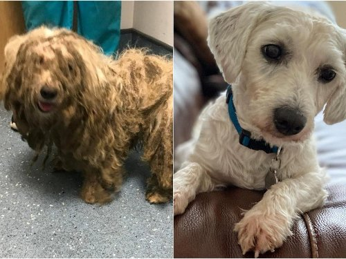 Abandoned dog with fur so matted he could barely walk or see rescued by Leeds RSPCA