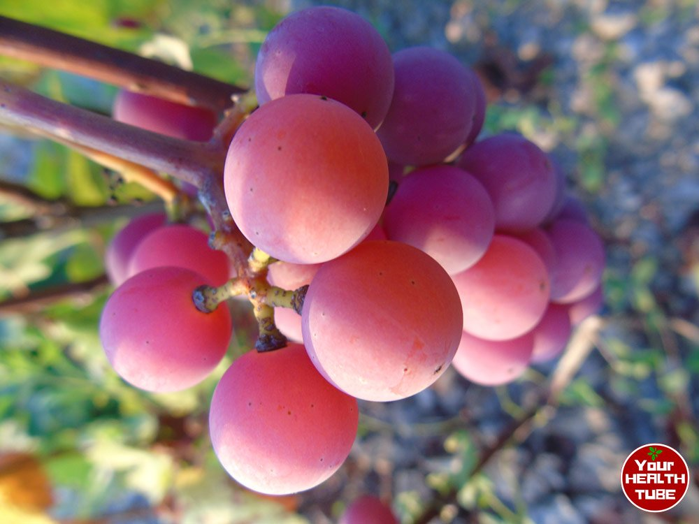 """""""Grape"""" News for Your Heart Health (French & Italians Know Why!)"""