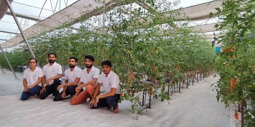IIT alumni show how you can grow chemical-free crops by using hydroponics