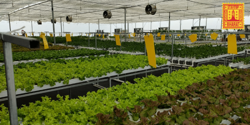[Startup Bharat] Why this agritech startup believes the future of farming is in hydroponics