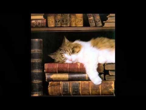 """Kitten Lullaby - Leonard Cohen's """"Lullaby"""""""