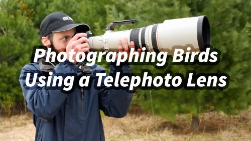 Bird Photography With Telephoto Lenses: Finding Wildlife Faster in Camera Viewfinder