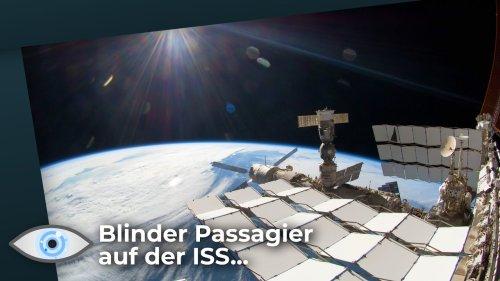Kuriose Entdeckung auf der ISS: Schon bald Gewächshäuser auf dem Mars?