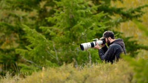 Jackson Hole Wildlife Photography With Sony a7R IV 200-600mm