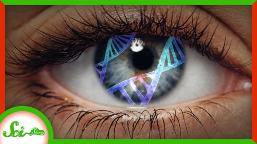 Treating Blindness With Light (and Gene Therapy)   SciShow News