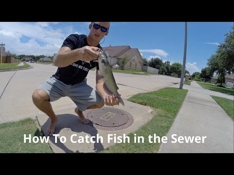 How To Catch More Fish In The Storm Sewer This Summer