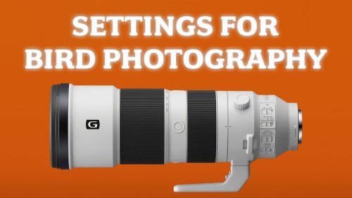 Sony 200-600mm Lens Settings for Bird & Wildlife Photography: My Setup for Capturing the Action