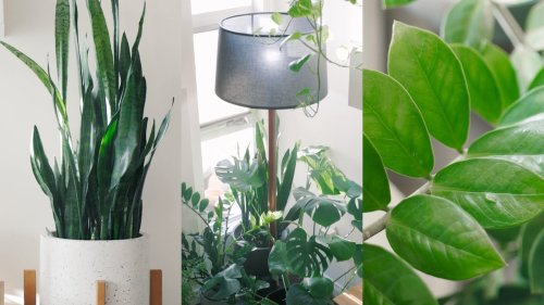 Peaceful Plant Tour – Indoor Houseplant Collection 🌱