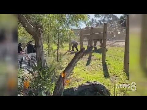 Dumbest Dad Of The Year Takes Toddler Daughter Into Elephant Enclosure at San Diego Zoo, Drops Her, Gets Arrested