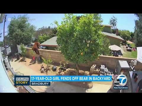 17-Year-Old California Girl Rushes Bear, Knocks It Off Backyard Fence To Save Her Dogs