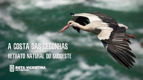 A Costa das Cegonhas - Retrato natural do Sudoeste | Teaser - Rota Vicentina