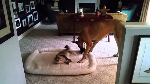 When the cat steals the dog's bed.