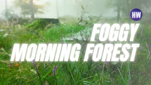 🌲🌫️  Foggy morning forest • Foggy forest walk • Foggy river • Foggy forest panorama dynamic theme