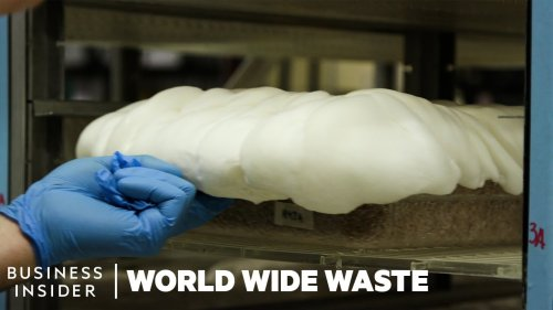 How Mushrooms Are Turned Into Bacon And Styrofoam   World Wide Waste