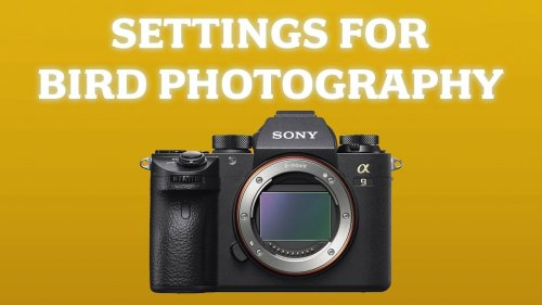 Sony Camera Settings for Bird & Wildlife Photography: My Setup and Custom Buttons for a9 a7R III IV