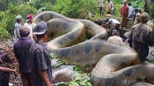 10 Extraños Descubrimientos En La Selva Amazónica
