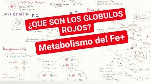 🔴¿Qué Son los GLOBULOS ROJOS?/ Metabolismo y Absorción del Hierro (Para principiantes) #1