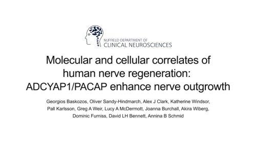Molecular and cellular correlates of human nerve regeneration: ADCYAP1/PACAP enhance nerve outgrowth