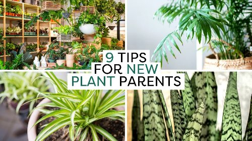 New Plant Parent? 9 Must-Know Indoor Plant Tips & Hacks | Compilation