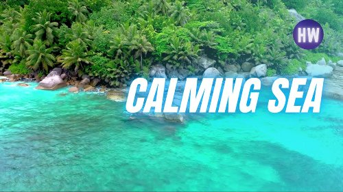 😴🌊 Peaceful Ocean Sounds and birds • Calming Island Beach • Relaxing 2 Hour • Birds Singing
