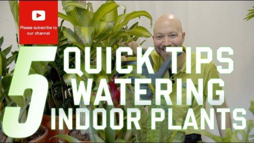 5 Quick tips on watering your indoor plants