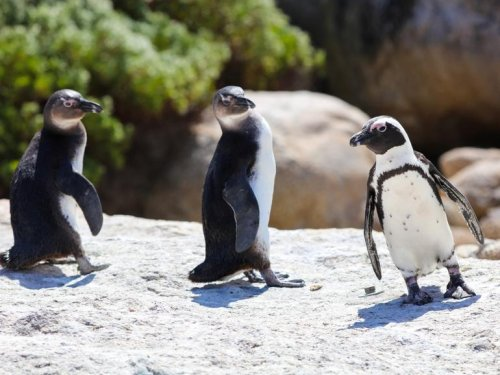 What's the most popular Linux of them all? | ZDNet