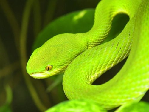 Google open-sources Atheris, a tool for finding security bugs in Python code | ZDNet
