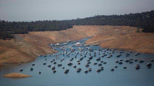 USA: Kein Wasser im Westen – aber Heu für saudische Kühe