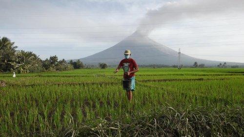 Gentechnik: Philippinen genehmigen gentechnisch veränderten goldenen Reis