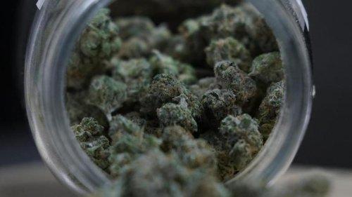 Kriminalität: Cannabis-Plantage mit rund 1000 Pflanzen entdeckt