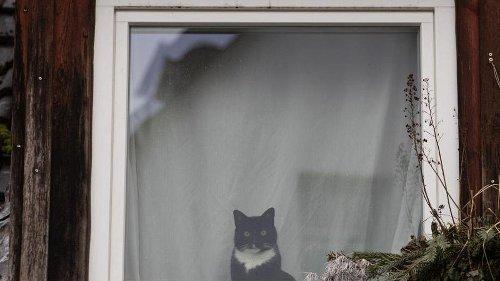 Hauskatze warnt Besitzerin vor Einbrecher