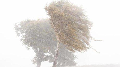 Wetter: Sturm verursacht Schäden im Wartburgkreis