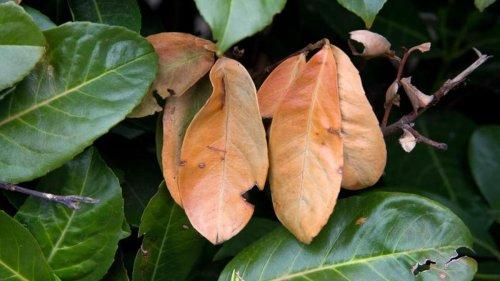 Folgen des Winters: Notfallhilfe für Pflanzen mit Frostschäden