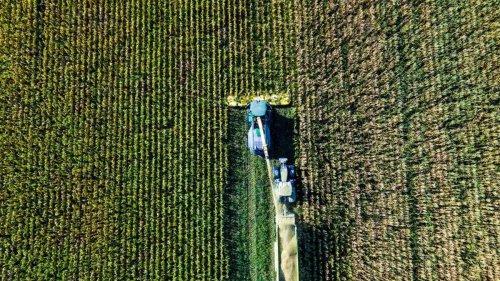 Agrar: Wetter führt in Niedersachsen zu verzögerter Maisernte