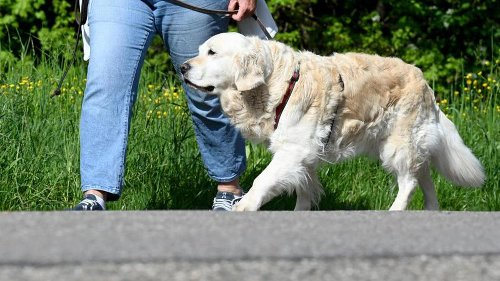 Neue Gesundheitsstudie nimmt auch Haustiere in den Blick