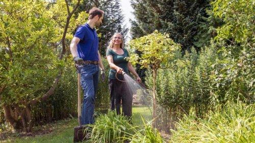 Gärtnern im Herbst: Es ist Zeit für die richtige Rosenpflege